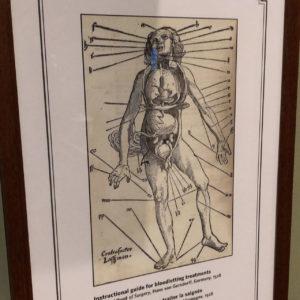Bloodsuckers: legends To Leeches - Royal Ontario Museum